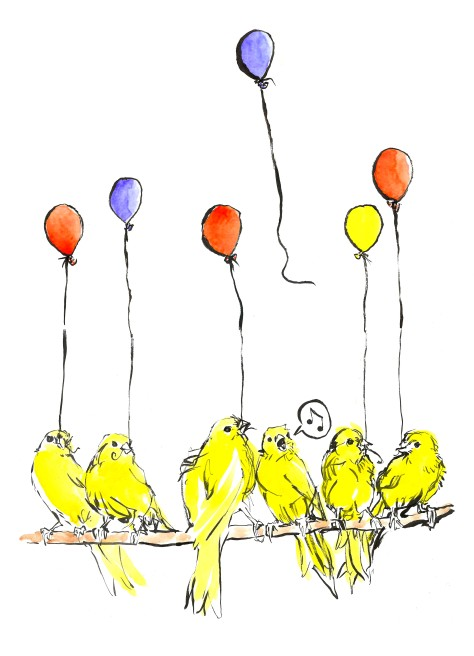 canaries big