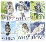 jenny robins - amelia's magazine - windsor2 - owls
