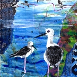 jenny robins - Black-winged Stilt