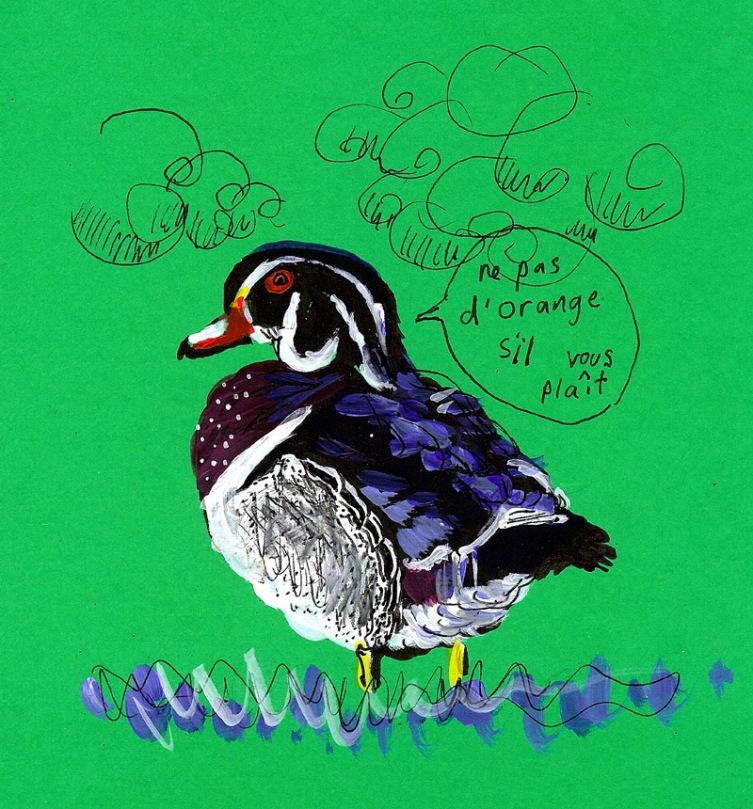 jenny robins - wood duck
