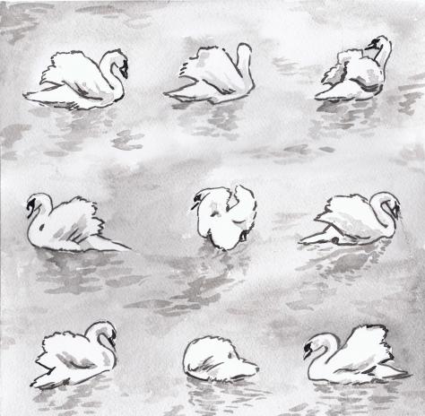 jenny robins - swans
